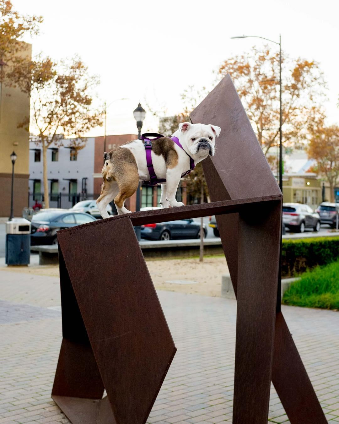 Explore downtown San Jose with your dog with a self-guided art walk from Public Art San Jose.