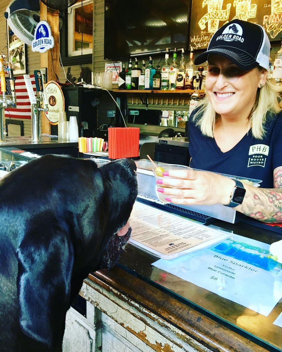 Eat brunch at dog-friendly Poor House Bistro in San Jose.