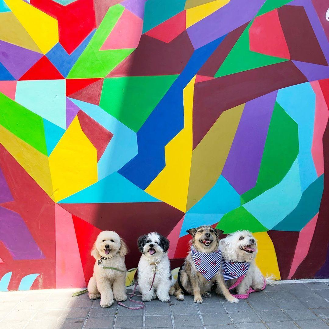 Indulge in a shopping spree at pet-friendly Santana Row in San Jose.