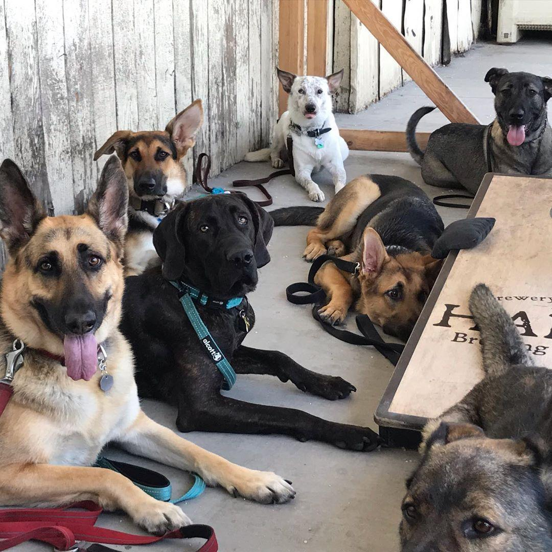 Sample local brews at pet-friendly Hapa's Brewing Company in San Jose.