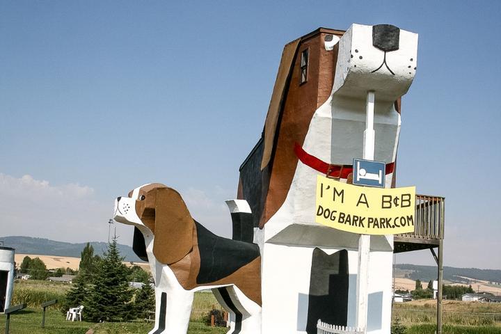 Ace hangs out at the Dog Bark Park Inn, a pet-friendly B&B in Idaho.