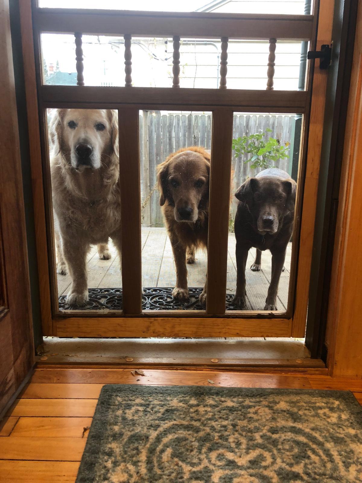 3 Pups