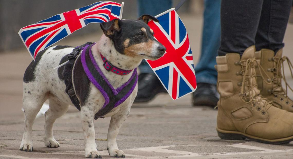 Pet Travel Can Be Affected by Brexit.