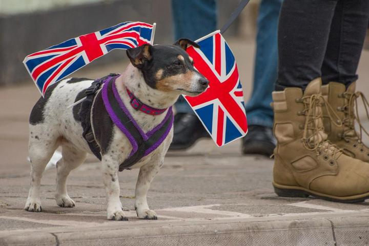 How Brexit Will Affect Pet Travel.
