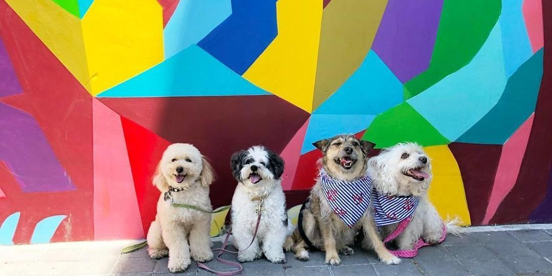 Visit dog-friendly San Jose with your pup.