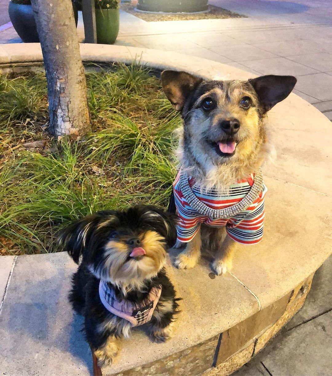 Dogs hang out at Rosie McCann's pet-friendly restaurant in San Jose.