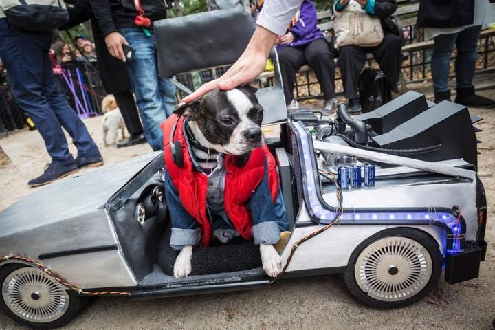 Visit Dog-Friendly Halloween Parades in New York City, NY.