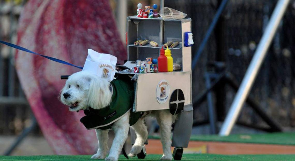 Can't Miss Dog-Friendly Events in October.