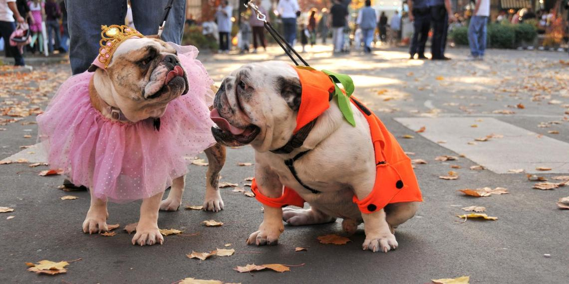 Attend These 13 Fabulous Halloween Dog Parades in 2019.