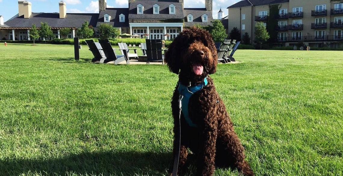Super Pet-Friendly Hotels in the South To Visit With Your Dog.