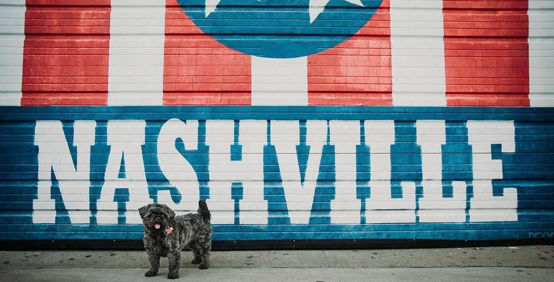 Spend A Dog-Friendly Weekend in Nashville.
