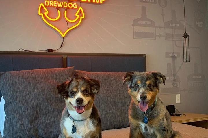 Two happy pups at the DogHouse Hotel, a pet-friendly brewery hotel in Columbus.