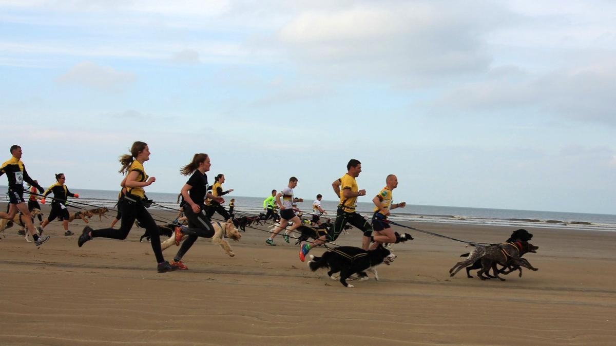 A group of Canicross runners runs on the beach.