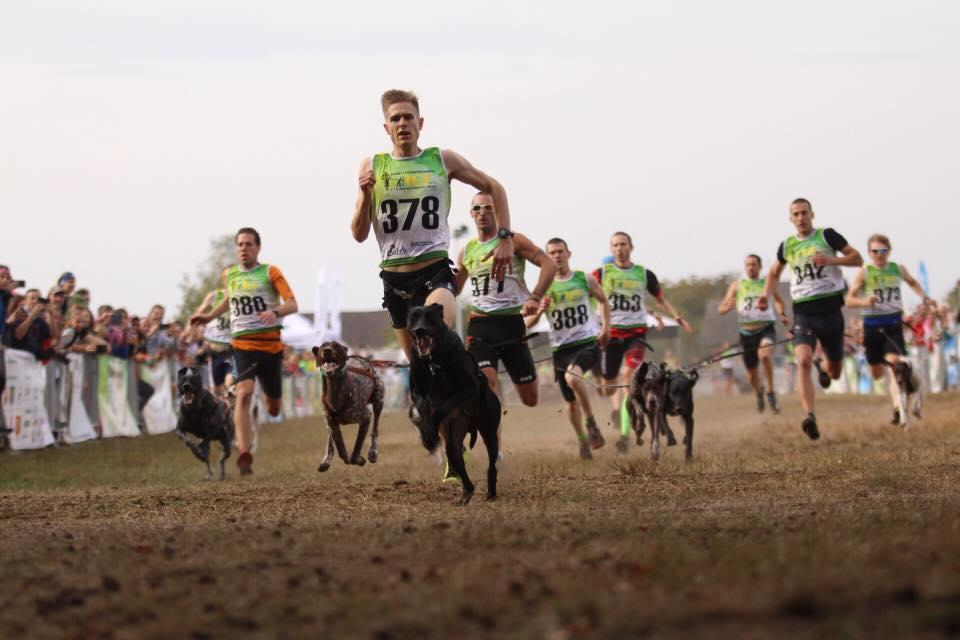 Athletes compete on a Canicross course.
