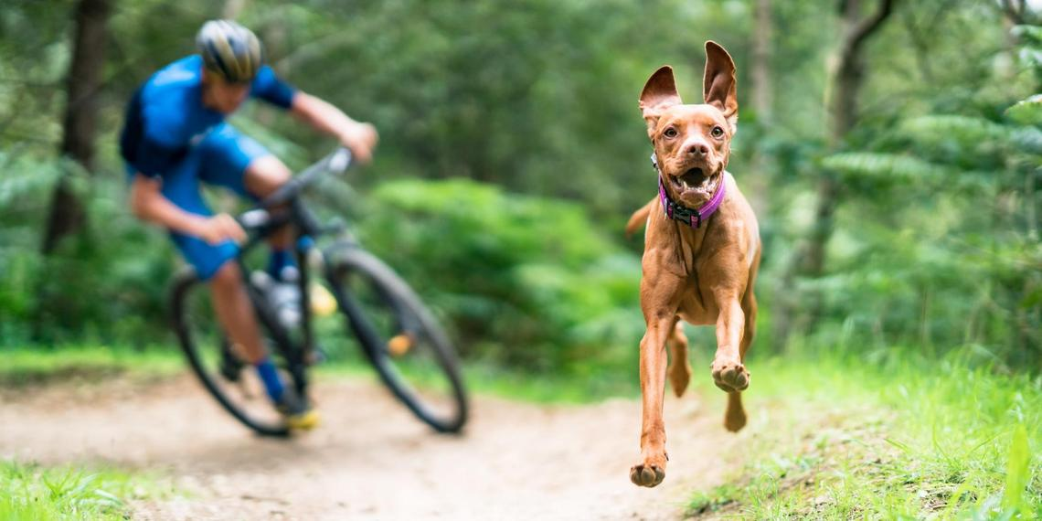 Extreme Canines: Mountain Biking With Fido.