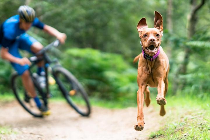 Extreme Canines: Mountain Biking With Fido