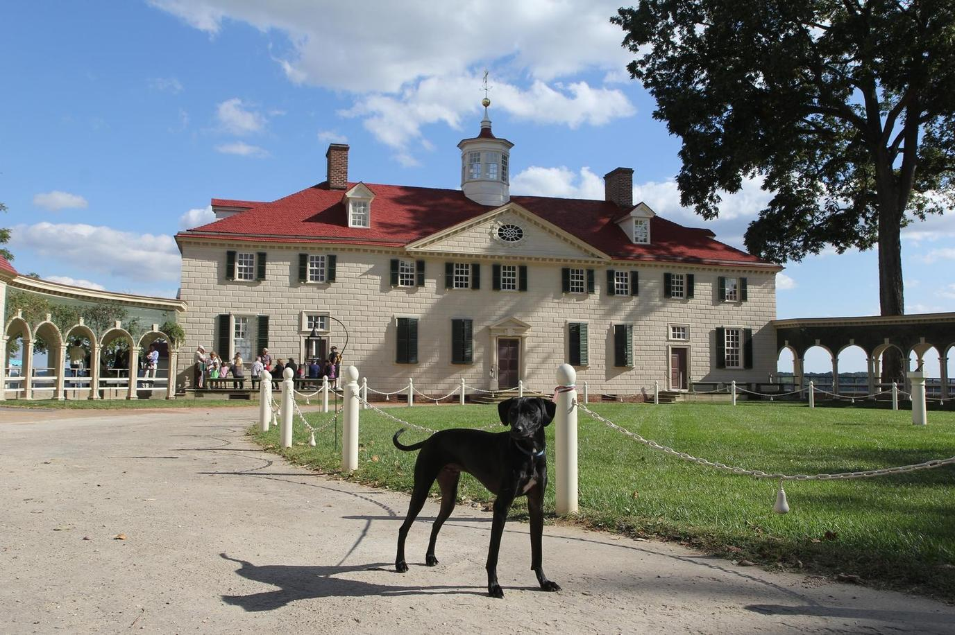 Bring Your Dog on a Pet-Friendly Walking Tour at Mount Vernon.