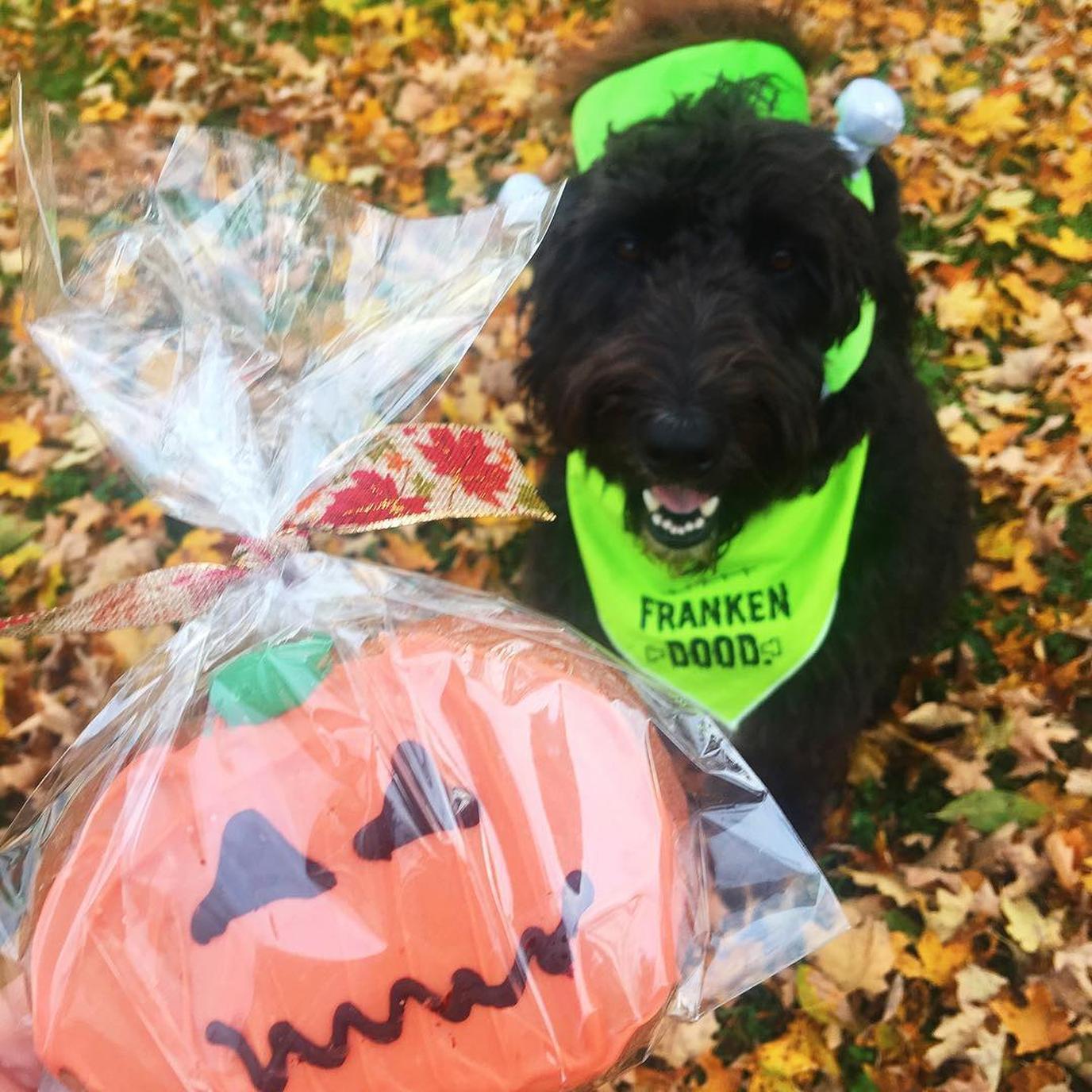 River Dog Bakery creates seasonal special baked treats for dogs.