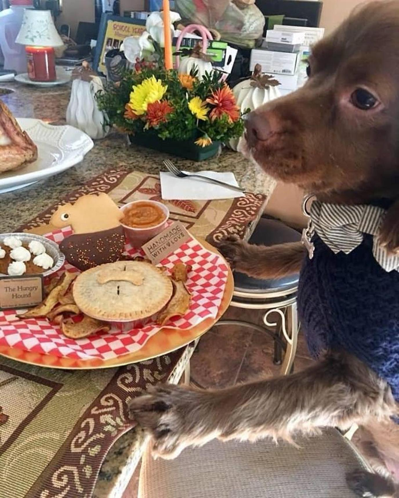 Dog bakery The Hungry Hound in New Jersey creates special Thanksgiving meals for dogs.