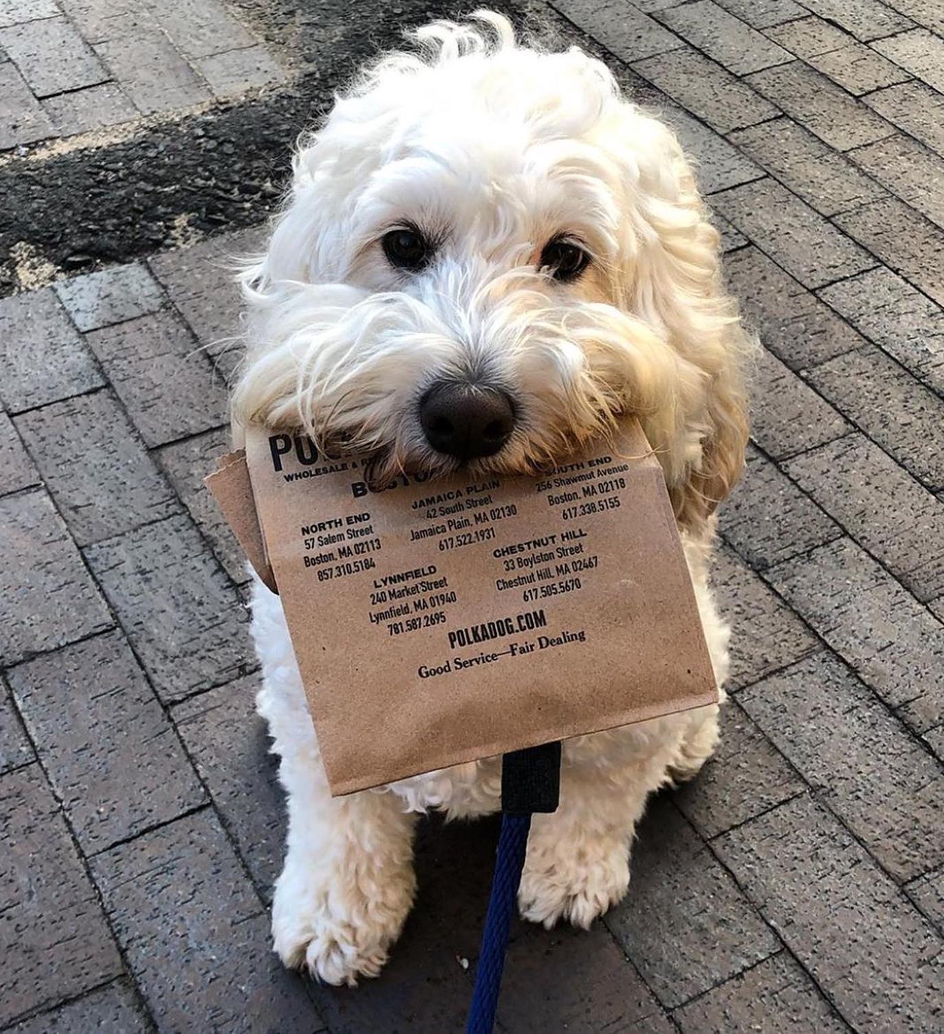 Polkadog Bakery is a neighborhood spot for seasonal dog treats in the Boston area.