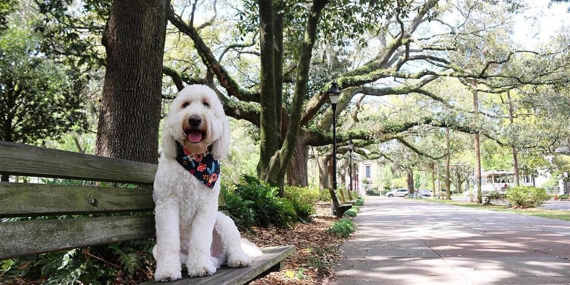 A Weekend in Dog-Friendly Savannah.