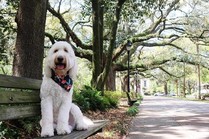 Your Dog Will Love Walks Under the Oak Trees in Dog-Friendly Savannah.