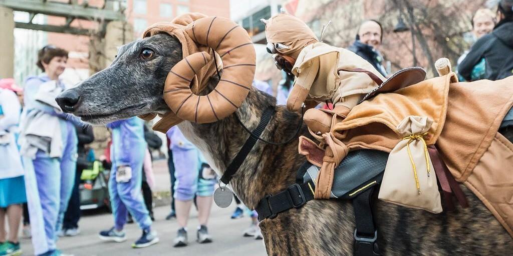 Petrifying Pet-Friendly Halloween Races.