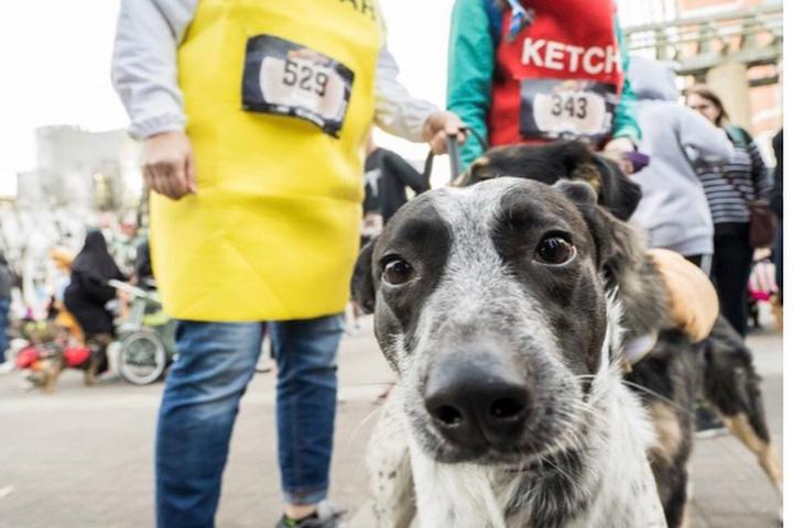Bring Your Dog to a Pet-Friendly Halloween Race.