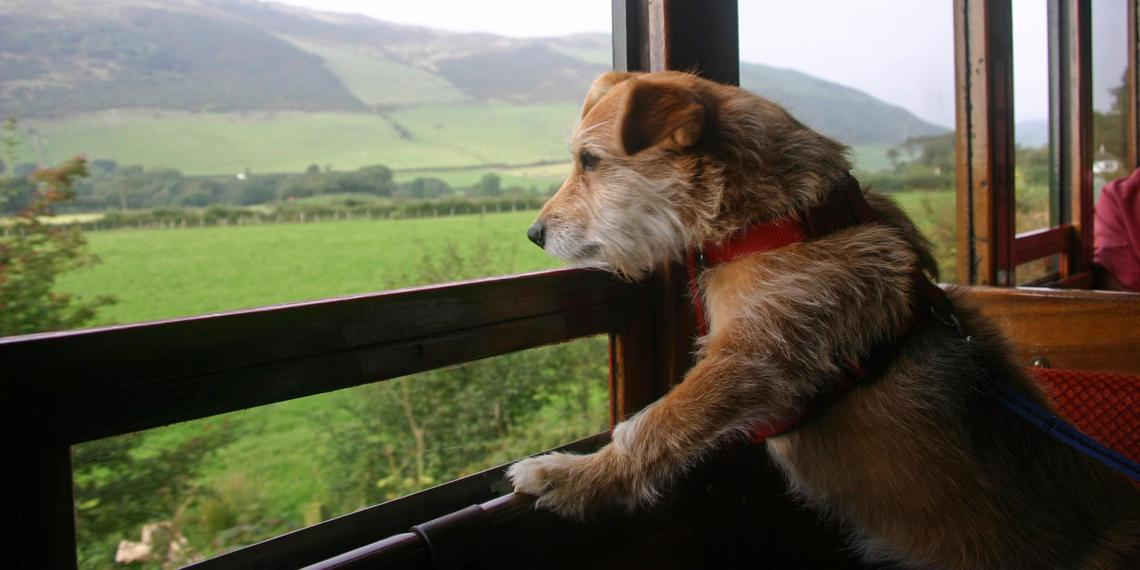 9 Epic Pet-friendly Train Rides to Take With Fido.