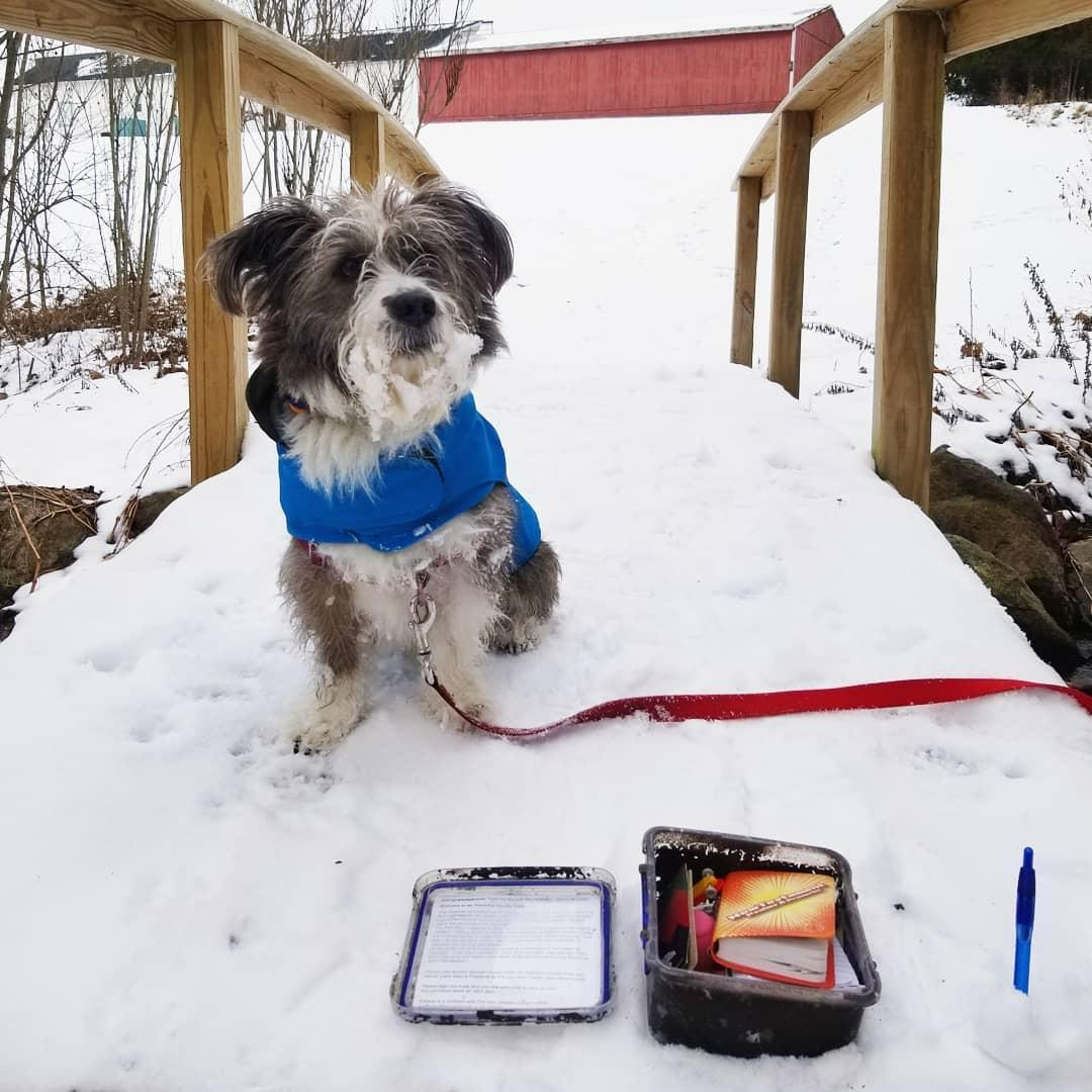 Geocaching with dogs can be enjoyed at any time of year!