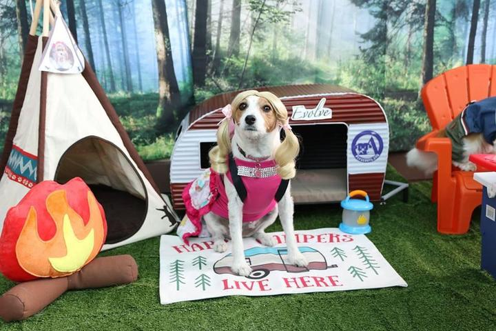 Can't-Miss Dog-Friendly Events in November