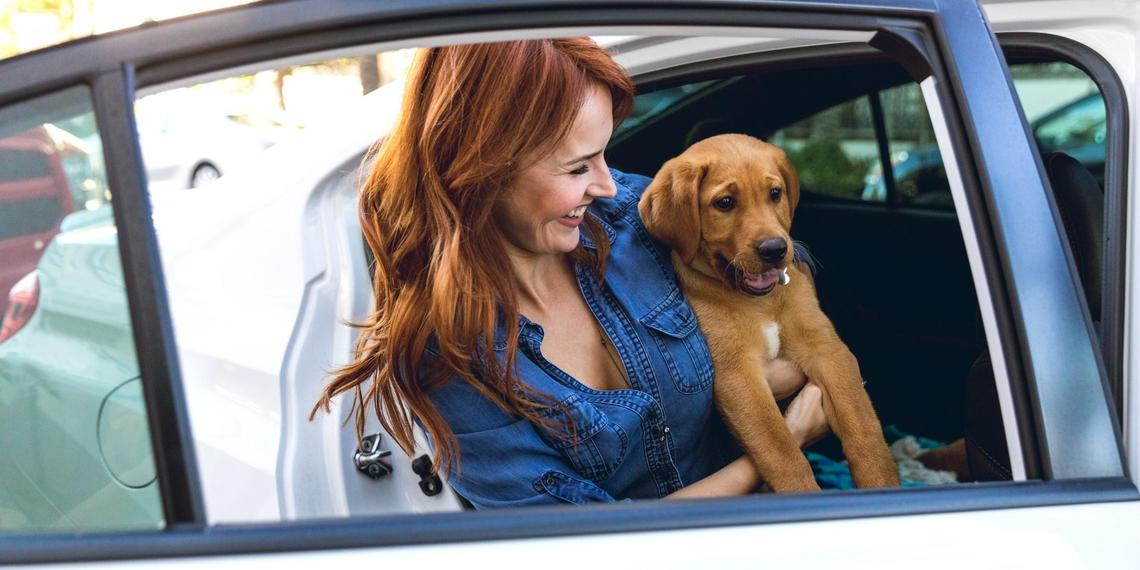 Uber Pet set to change the game for pet-friendly rideshares