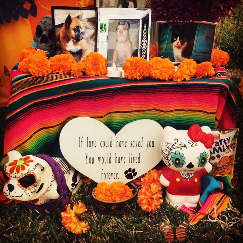 A Day of the Dead altar to dogs.