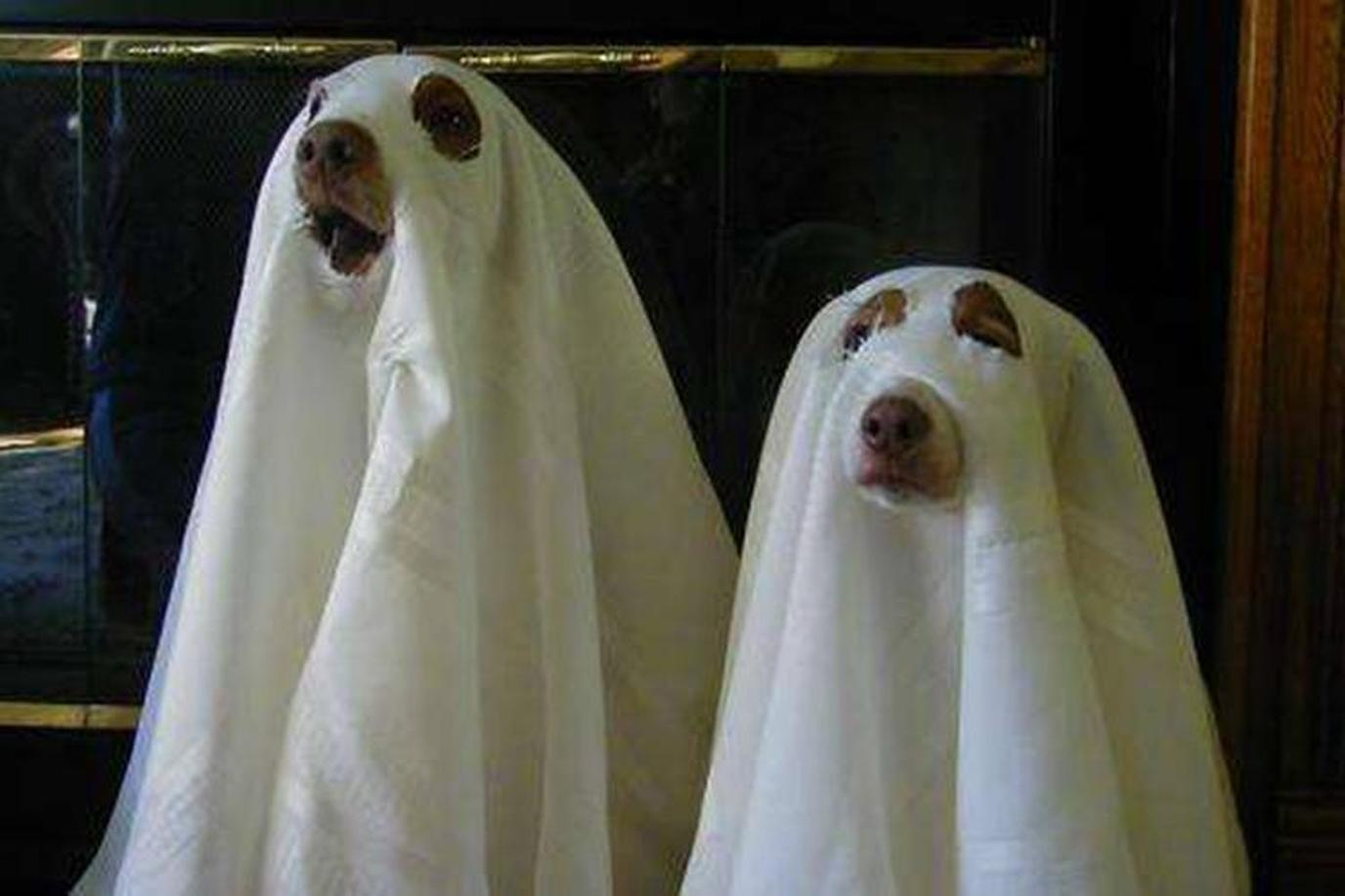 The Haunted Walk of Toronto welcomes dogs.