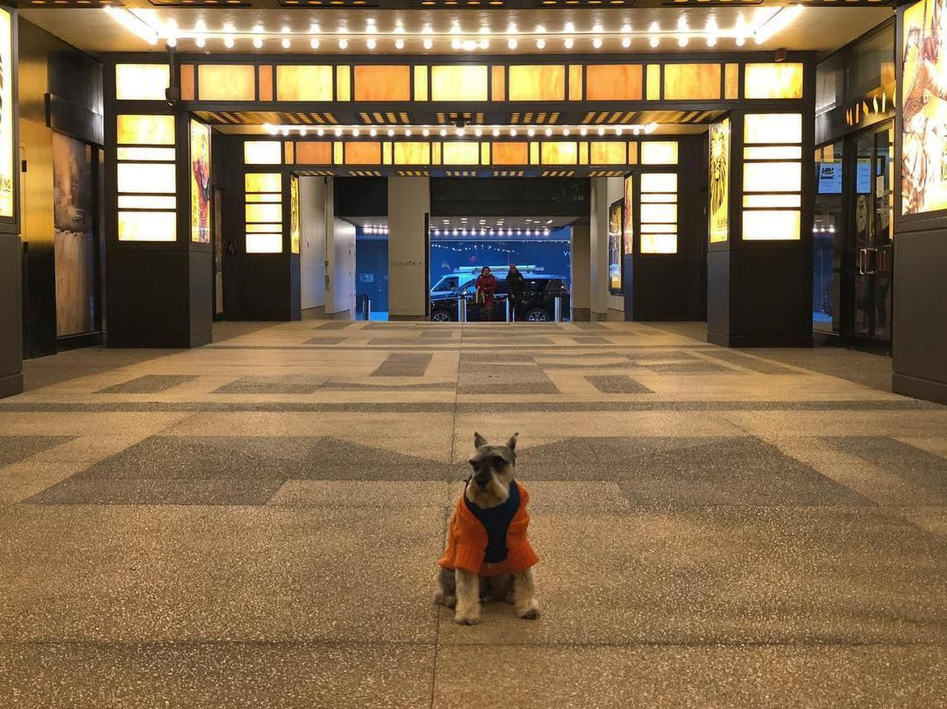 The Haunted Broadway Theaters Walking Tour in New York City welcomes dogs.