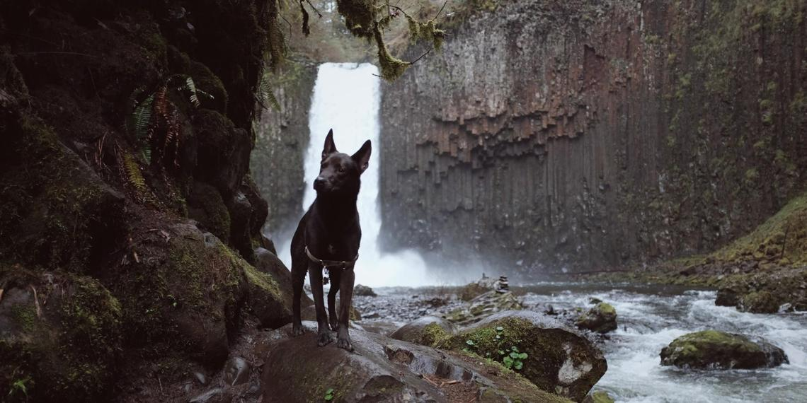 Visit These Pet-Friendly Waterfall Hikes With Your Dog.