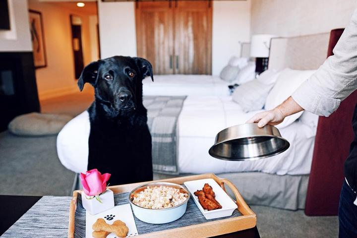 The Little Nell Is a Pet-Friendly Hotel With a Dog Room Service Menu.
