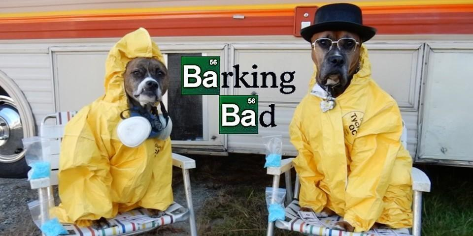 Two Dogs Dressed in Breaking Bad Halloween Costumes.