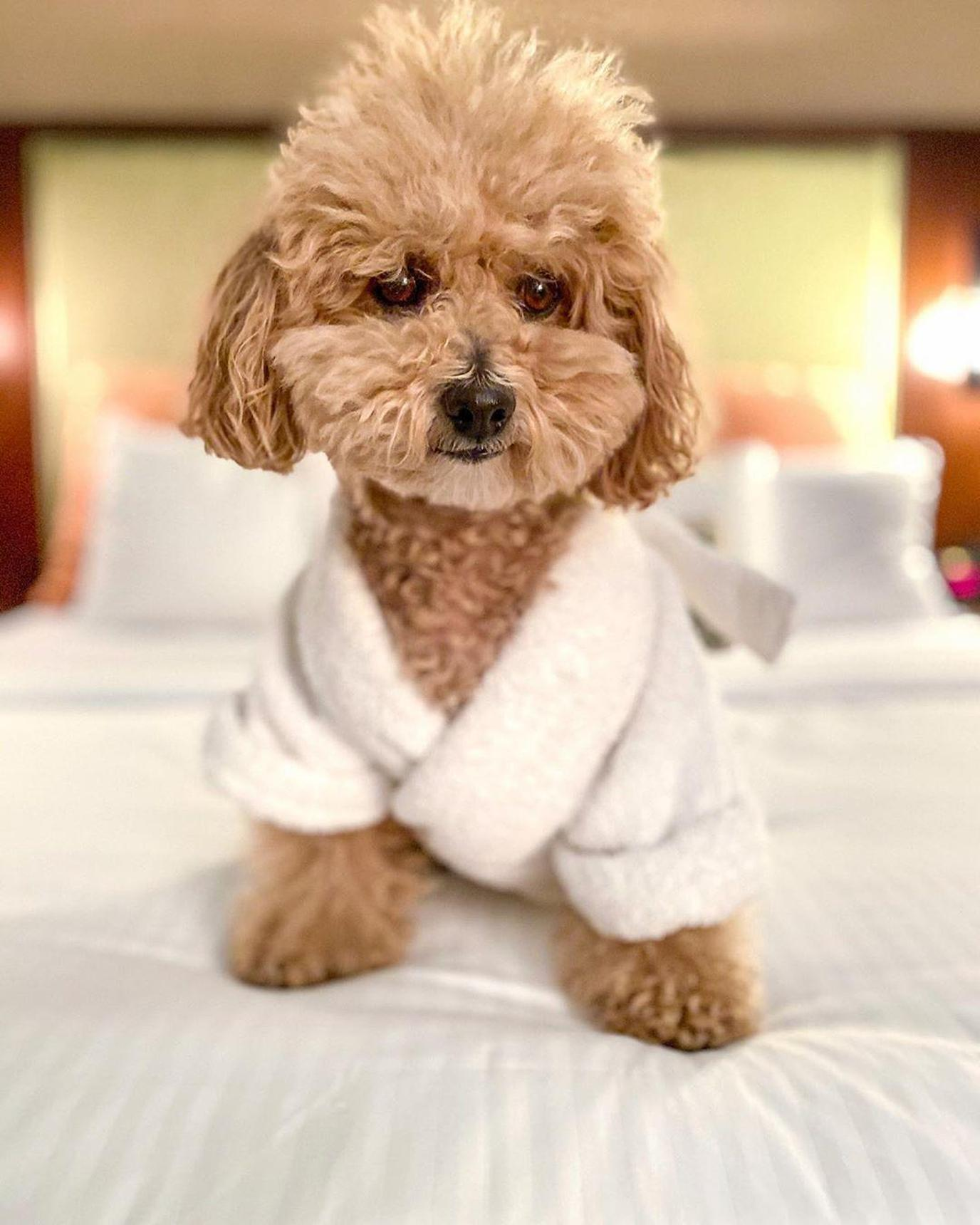 A pet-friendly hotel for the holidays is much better than staying with relatives!