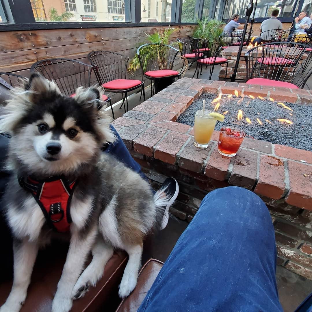 Warm Fido S Bones Around The Fire Pit At These Pet Friendly Restaurants Bringfido