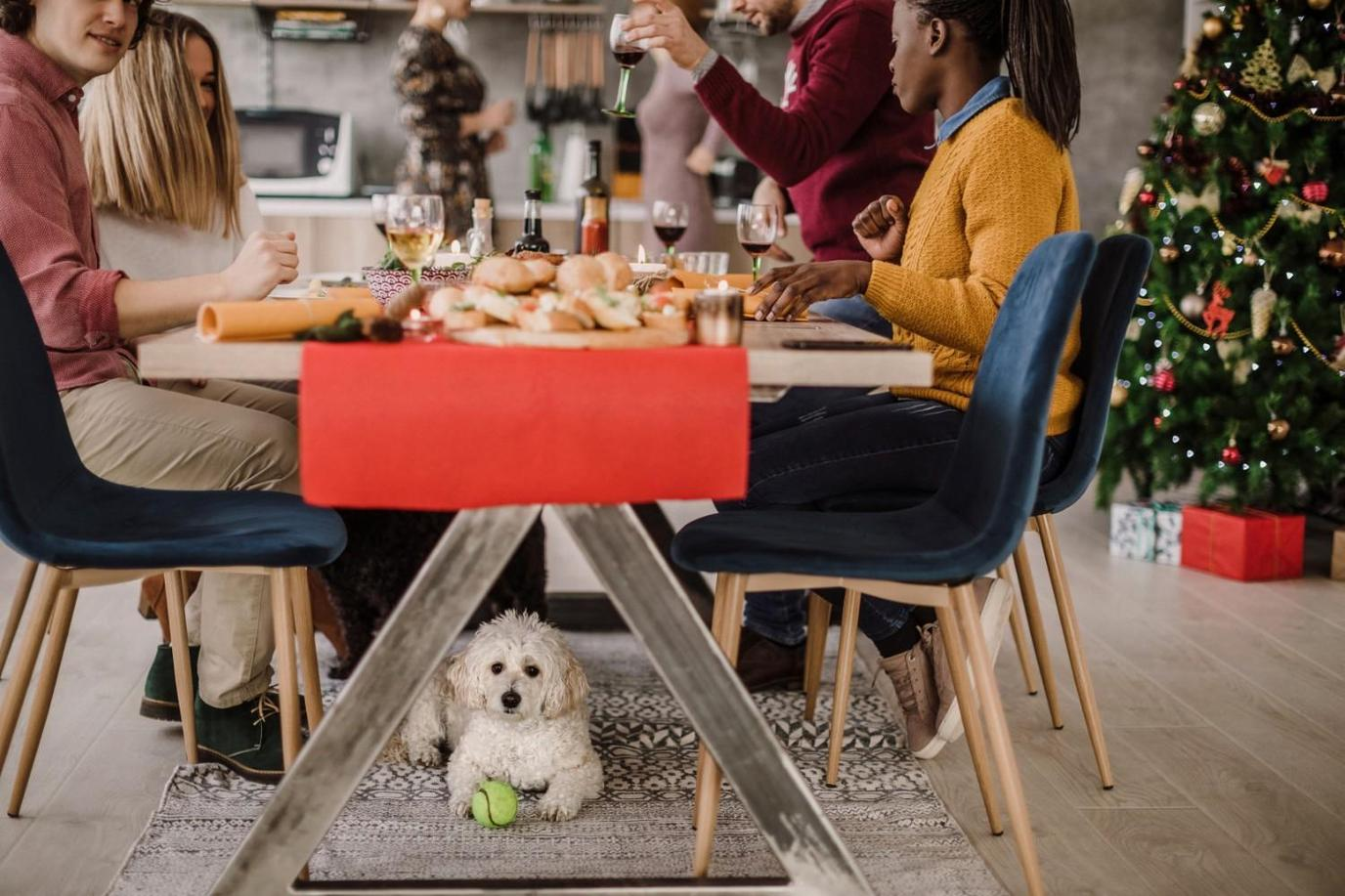 Stay at a pet-friendly hotel with a dog menu for the holidays.