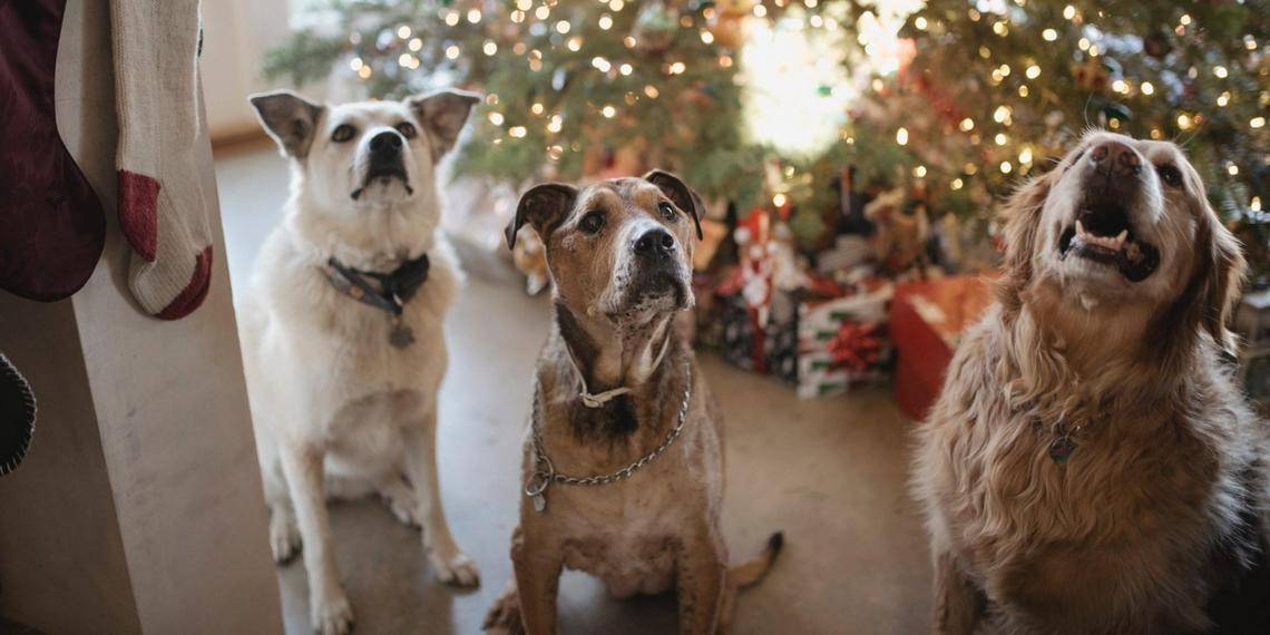 Why a Pet-Friendly Hotel Beats Staying With Relatives Over the Holidays