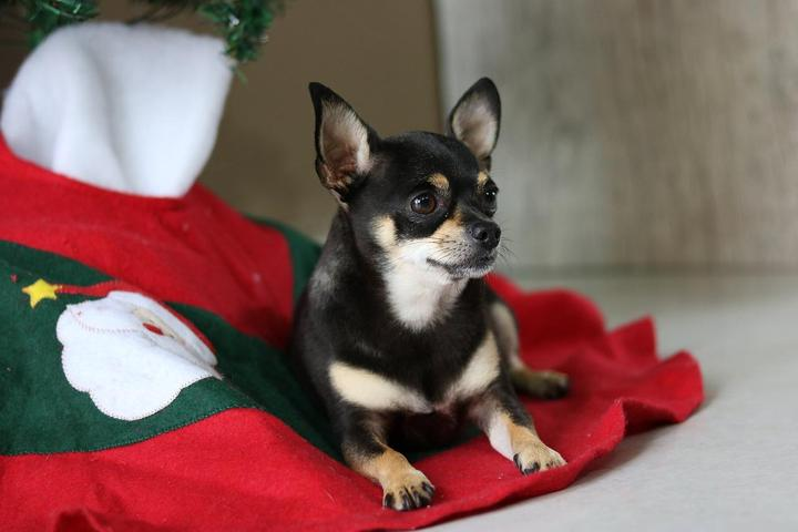 Reserving a room at a pet-friendly hotel will give your dog much cozier holiday accommodations.