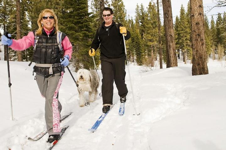 Wagging in a Winter Wonderland: 7 Small Towns for a Winter Vacation with Fido