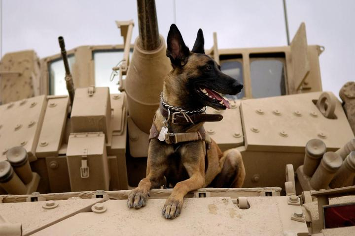 A dog sits atop a U.S. Army tank.