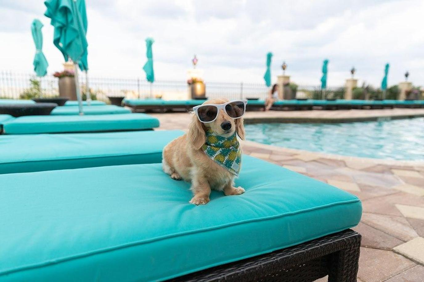 A happy puppy at a pet-friendly hotel in Florida.