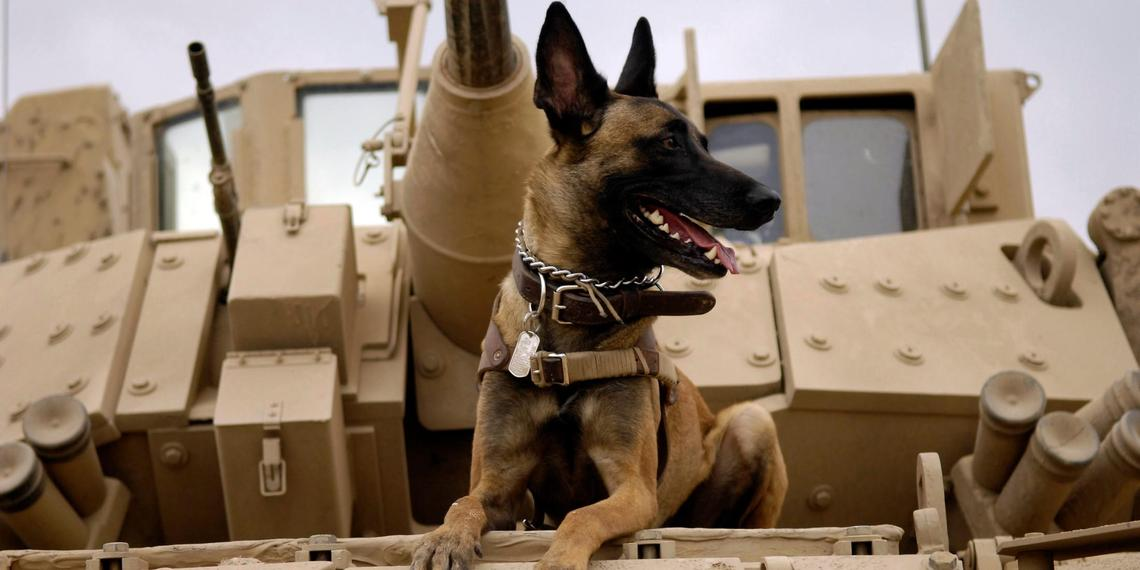 We salute our brave Military Dogs.