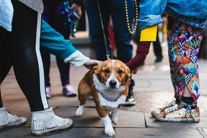 A Dog Wearing Mardi Gras Beads Is Petted in Dog-Friendly NOLA.