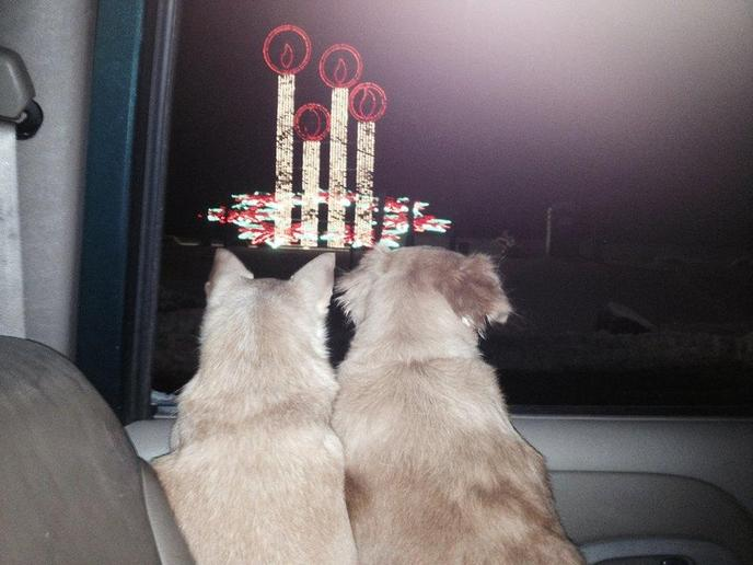 Two Dogs Stare at a Christmas Display From a Car at Dog-Friendly Bright Nights at Forest Park.