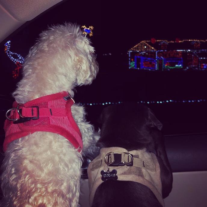 Glittering Lights at Las Vegas Motor Speedway Is a Dog-Friendly Christmas Light Display in Las Vegas